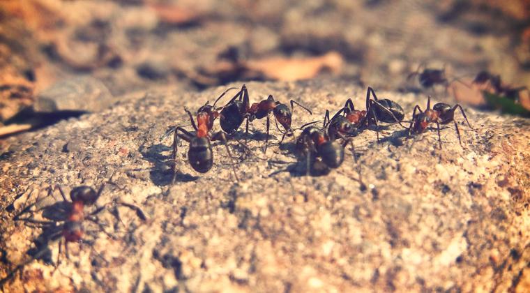 Hilfe, Ameisen-Invasion!