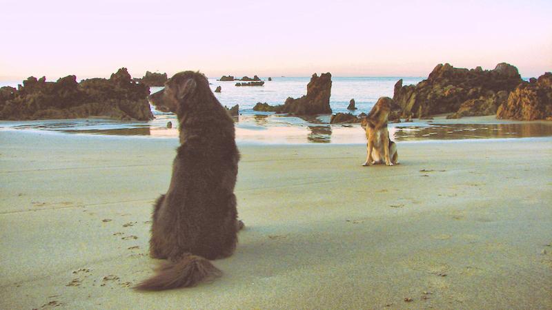 Fimg Camping Mit Hund In Spanien