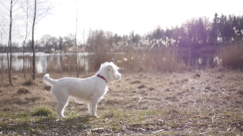 Reisen mit Hund und Katze Erste Hilfe