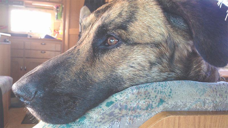 Mit Dem Hund In Wohnmobil Und Wohnwagen Unterwegs
