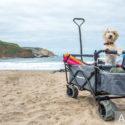 Nützliches Zubehör für Hunde auf Reisen und beim Camping