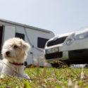 Hitze und Sonne – Gefahr für Hunde