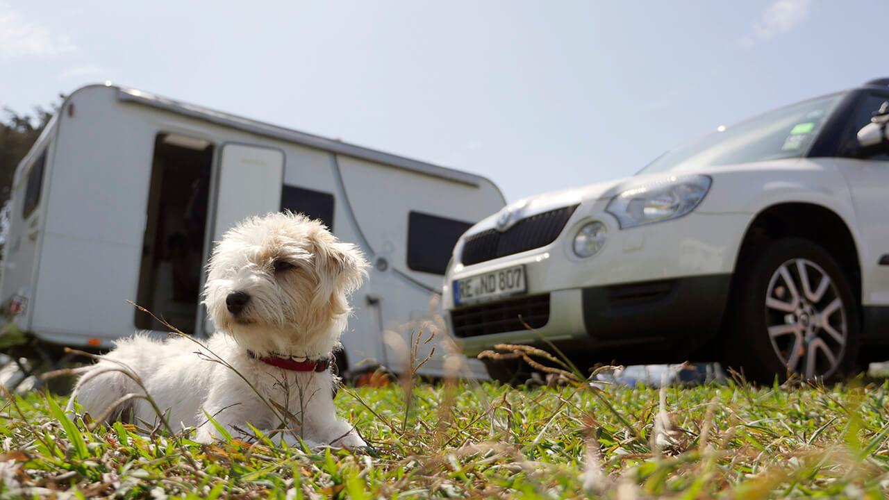 Hund bei der Hitze im Auto oder Camper