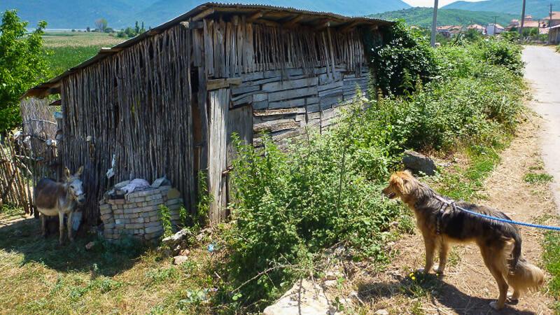Reisen und Campen mit Hunden in Albanien