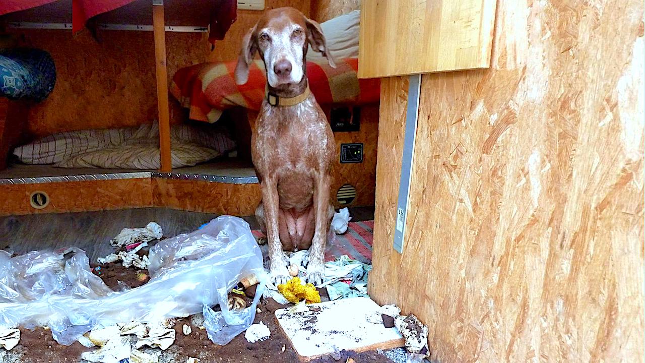 Hunde räumen auch gerne mal einen Mülleimer aus...