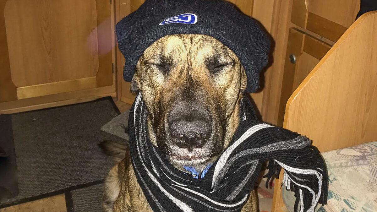 Hund vor Kälte schützen im Wohnmobil