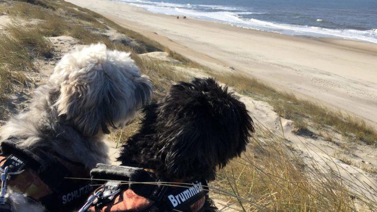 Reisen Mit Hund In Dänemark