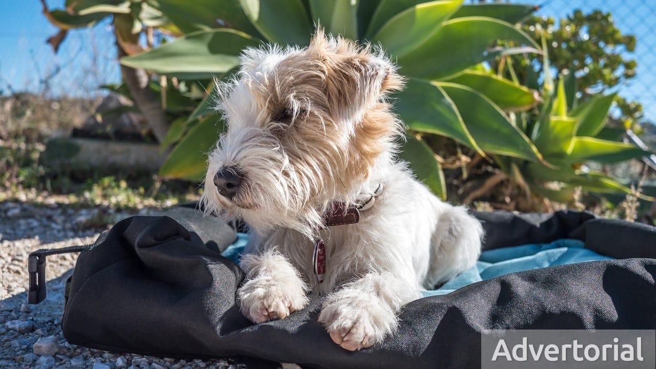 Produkttest: Hochwertiges Reisebett für Hunde von Handmade for dogs
