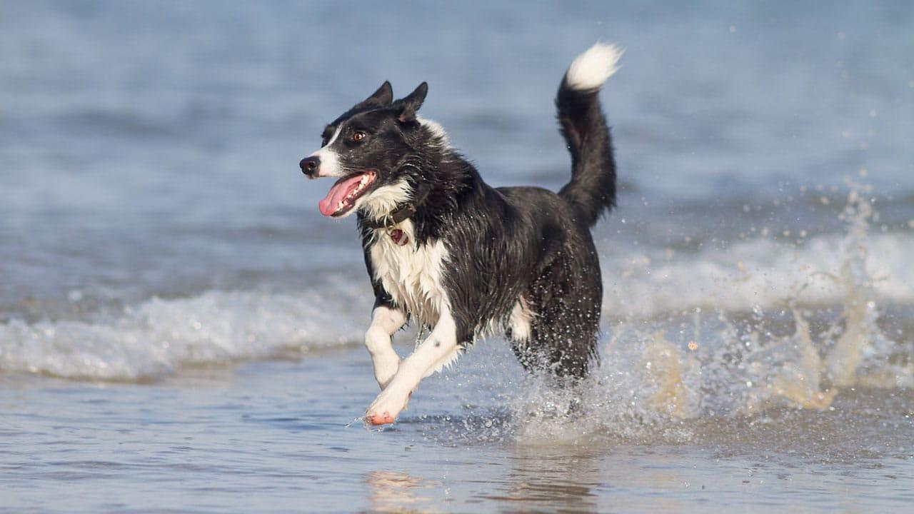 Ein Hund am Meer auf einer Reise mit Hund nach Frankreich