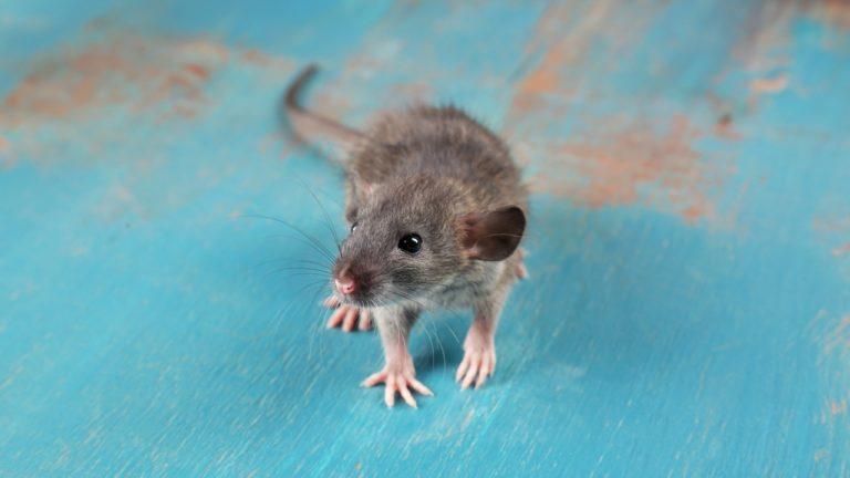 Mäuse, Flöhe, Mücken – Ungebetene Gäste In Wohnwagen Und Wohnmobil