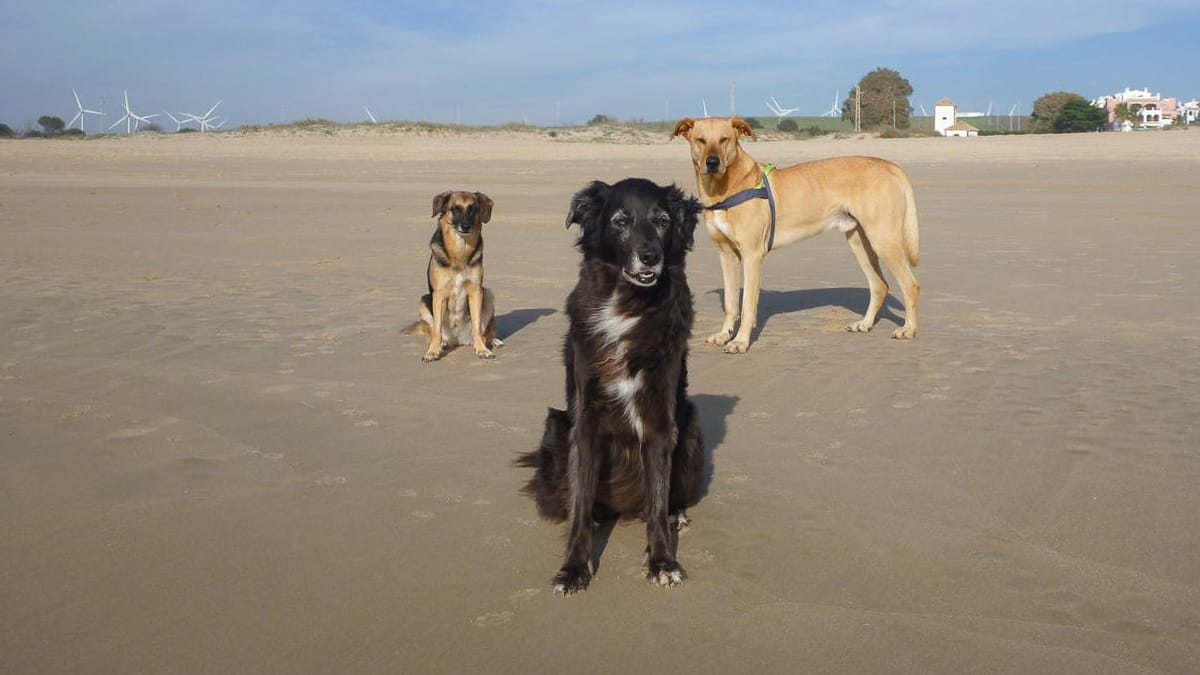Drei Hunde an einem der Hundestraende in Spanien