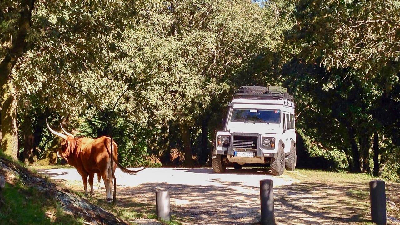 Ein Fahrzeug beim Wildcamping in Portugal