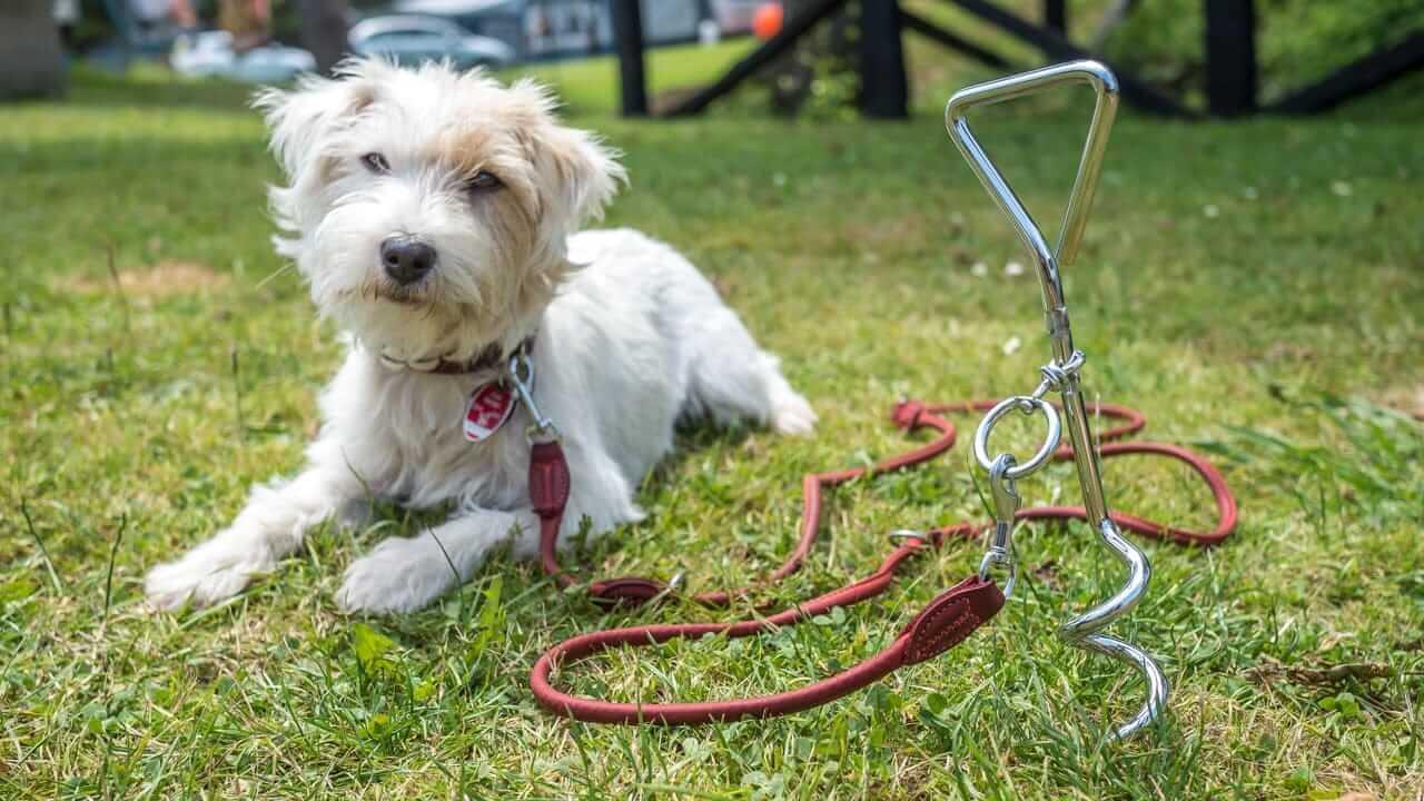 Ein Hund an der Leine auf einem Campingplatz