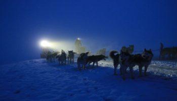 Huskys bei Mondschein im Winter