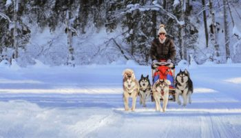 Mit Huskys im Schnee unterwegs