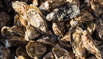 Austern aus Cancale in der Bretagne