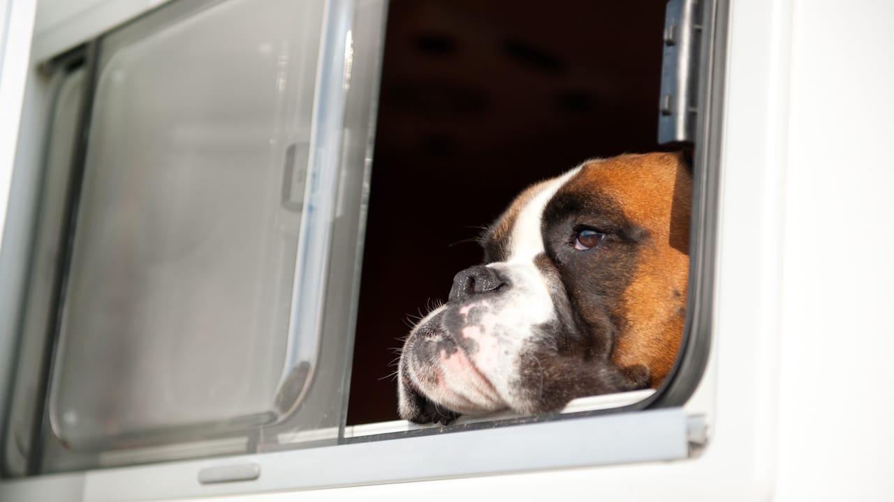 Ein Hund schaut aus einem Wohnmobilfenster