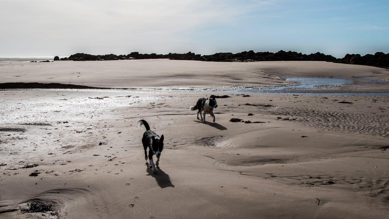 Zwei Hunde an einem der Hundestraende in Frankreich
