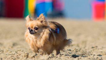 Ein Hund am Hundestrand in Frankreich in D
