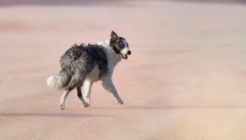 Ein weiter unberuehrter Hundestrand in Frankreich