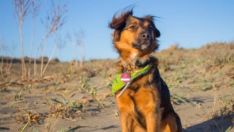 Ein Spaziergang beim Camping mit Hund in Italien