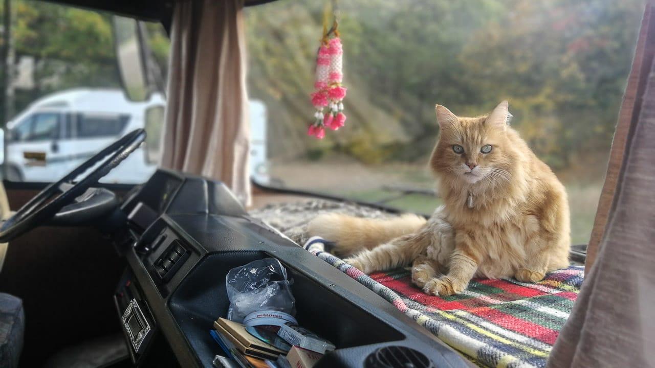 Eine Katze auf einem Armaturenbrett beim Camping im Wohnmobil