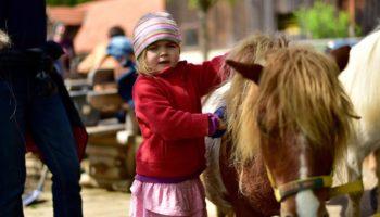 Ponyreiten auf dem kinderfreundlichen Campingplatz Miniponyhof Wild