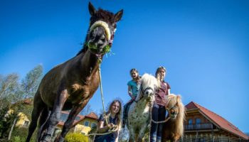 Spass mit Pferden auf dem kinderfreundlichen Campingplatz Miniponyhof Wild