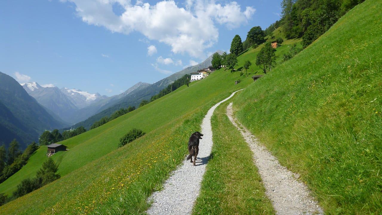 Wandern beim Camping in Österreich mit Hund