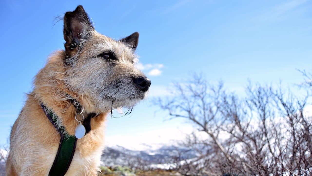 Camping in Skandinavien mit Hund