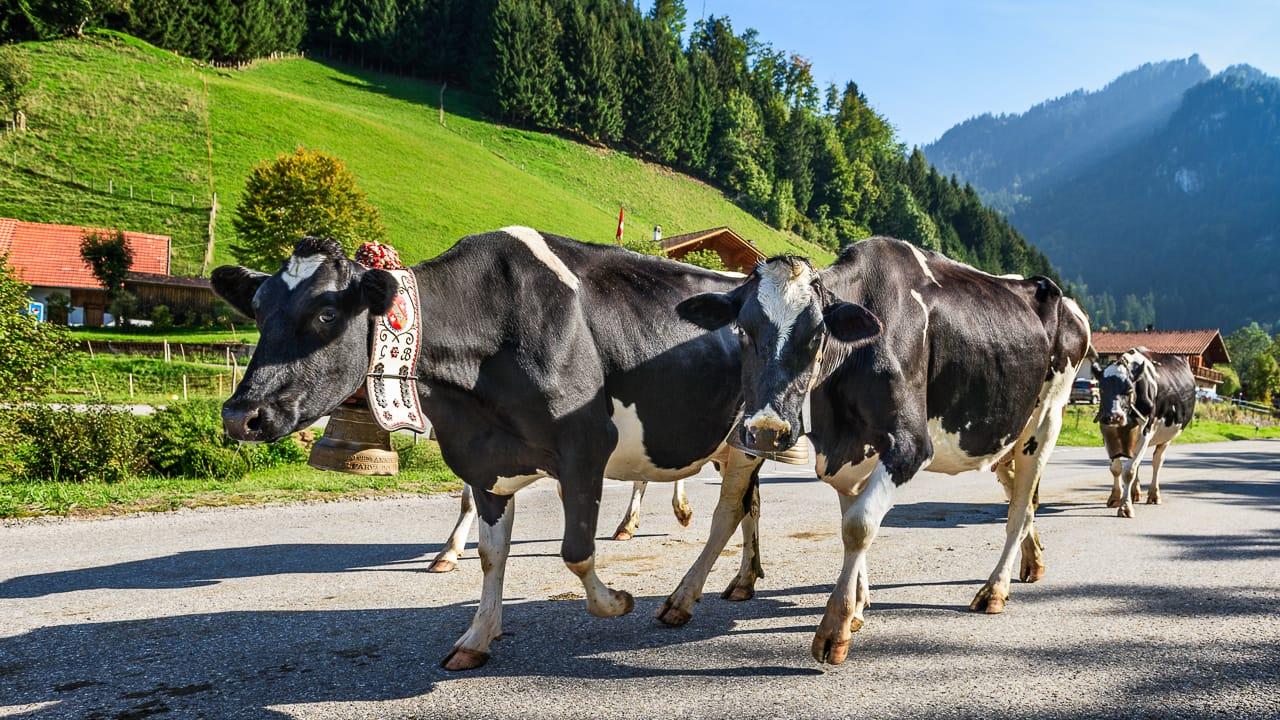 Verkehrsregeln in der Schweiz: Tempolimit, Autobahngebühren, Besonderheiten für Autofahrer und Camper