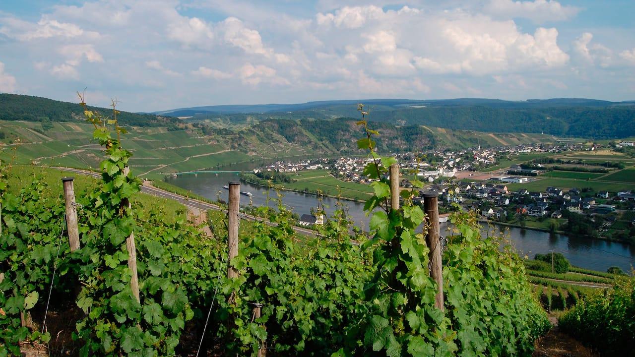 Camping an den Weinstrassen in Deutschland