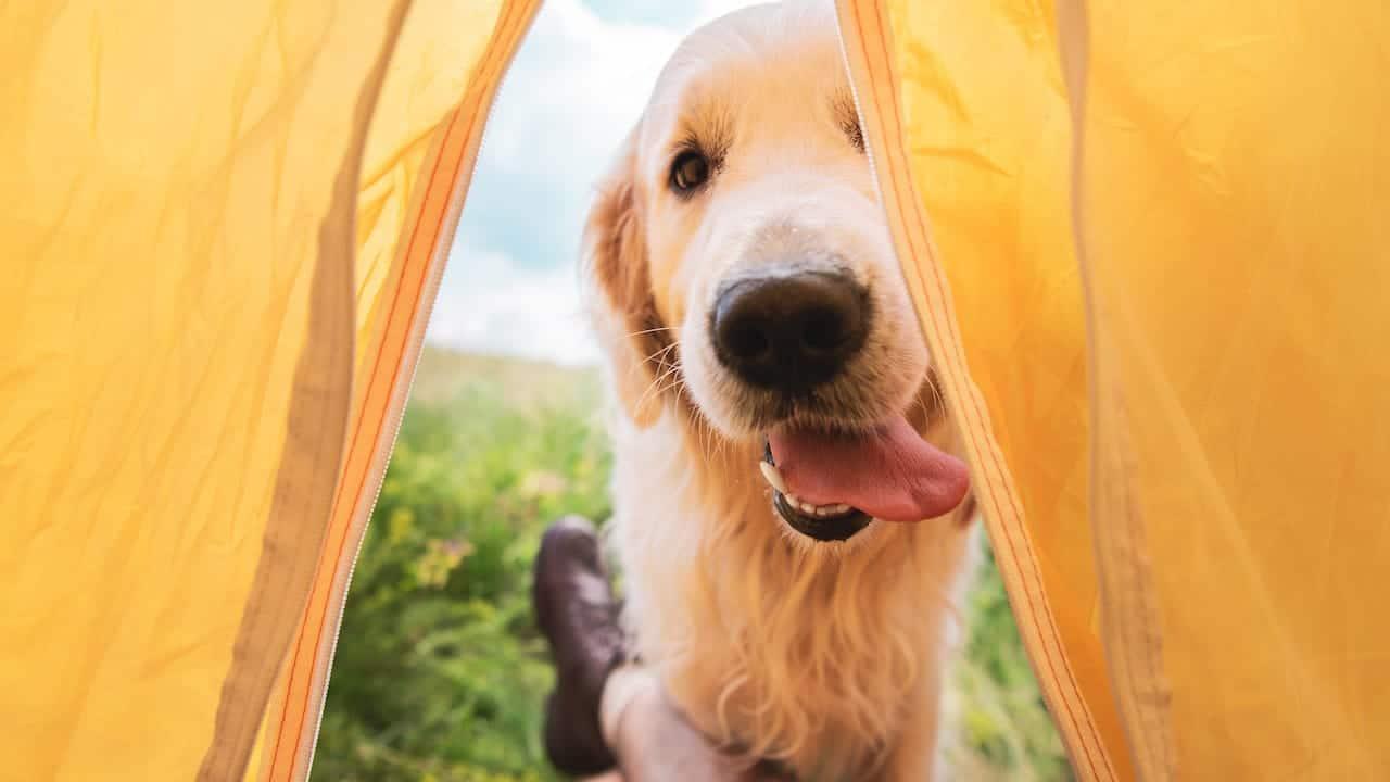 Camping mit Hund: 5 hundefreundliche Top-Campingplätze in Österreich
